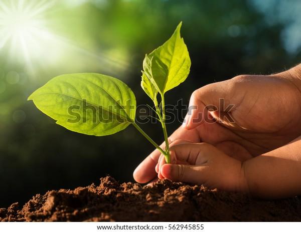 Zusammenpflanzung des Konzepts. Kinder und Vater legen Jungbaum auf grünem Hintergrund und Sonnenlicht morgens auf