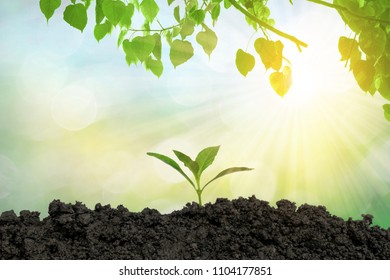 Planting trees in the ground the environment and the ecology.
