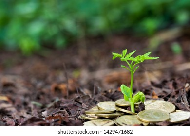 Planting trees growing in the garden,finance interest Coin young plant