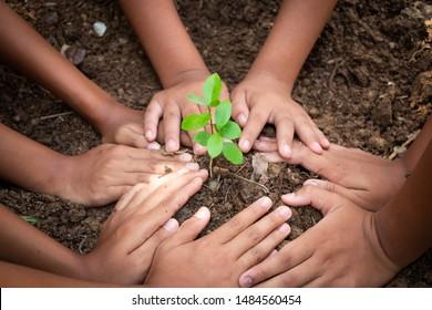 Planting trees, planting hands, planting trees, planting soil, saving earth and reducing global warming.