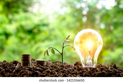 Planting trees near coins and light bulbs. Financial concepts.