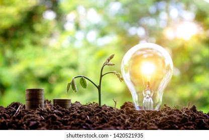 Planting trees on the sides of coins and bulbs, financial business concepts and saving money