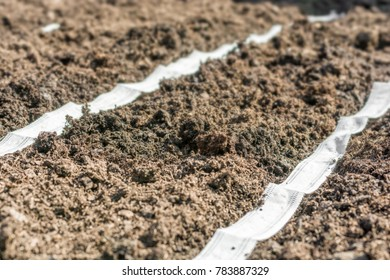 Planting vegetables with the help of a seed tape