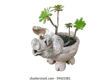 Plant-pot ornamental pig with succulents isolated on white background