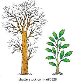 Plants 006