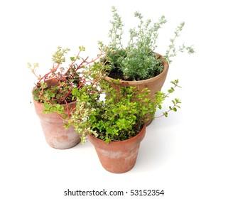 plants in aged terracotta pots