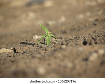 plants alone on the ground