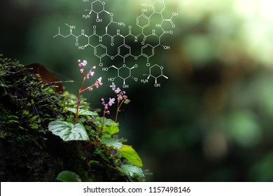 Plants background with biochemistry structure. Copy space using as background or input any text as you wish. Natural and science concept. - Shutterstock ID 1157498146