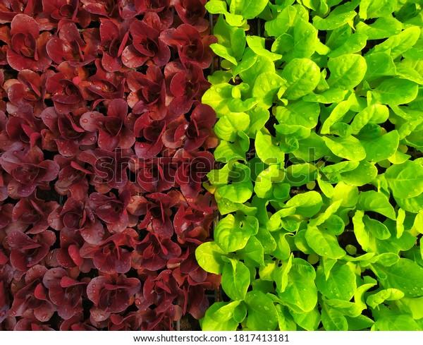 plants-background-different-colors-purpl