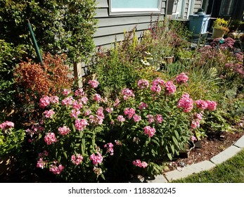 plants in backyard garden with green leaves and pink flowers