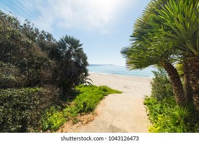 Plants by the sea in Le Bombarde beach, Alghero. Sardinia, Italy