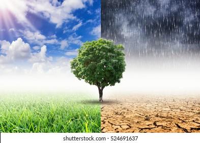 Plantas y cambio climático con el concepto de calentamiento global.