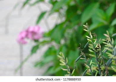 Plants closeup with low depth-of-field and flowers in background