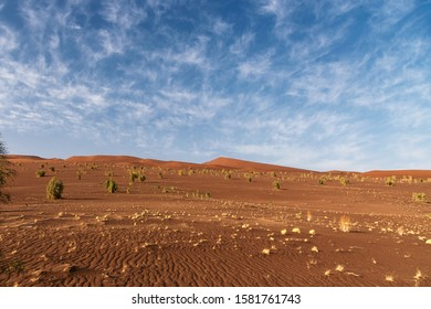 plants and cloudy sky in lut desert