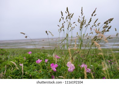 plants at the coast in Friesland