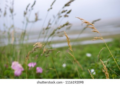 plants at the coast in Friesland. blur