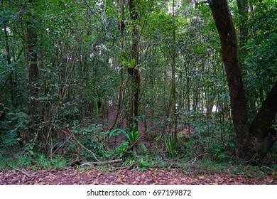 Plants in the Daintree Rainforest, part of the Wet Tropics UNESCO World Heritage Site