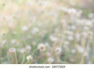 plants dandelions