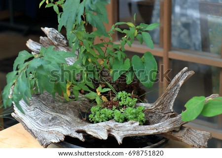 Plants Driftwood Vase Stock Photo Edit Now 698751820 Shutterstock