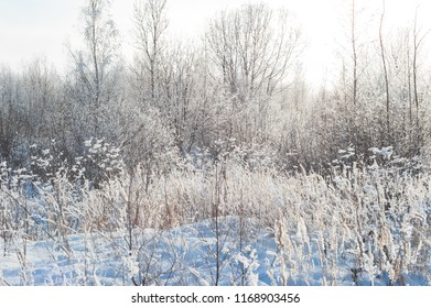 Plants in field covered with snow at winter