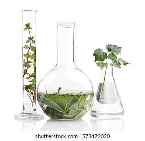 Plants in flasks isolated on white