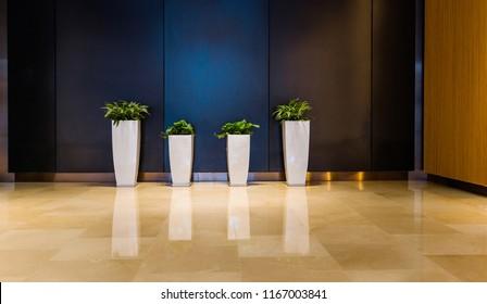 Plants flowerpots in modern business office corridor.