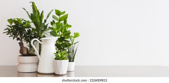 Plants in flowerpots on table near white wall mock up.