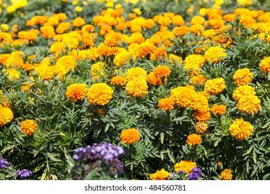 Plants and flowers in botanical garden in Balchik, Bulgaria