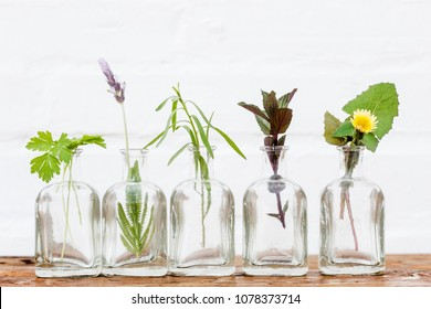 plants and flowers in bottles of oil essence in white wall
