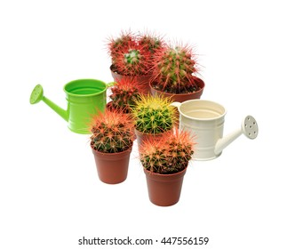Plants and flowers: bunch of multicolor cactuses and watering cans, close-up shot, isolated on white background