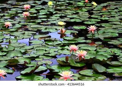 Plants, flowers, Holland, nature