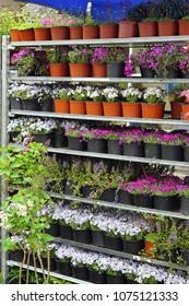 Plants and flowers in shelf at nursery garden