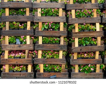 Plants and flowers: stack of wet wooden crates with flowers