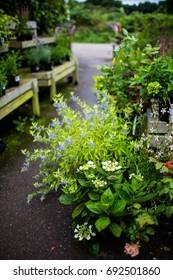 Plants at a garden centre