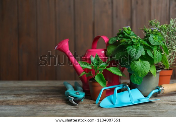 Plants and gardening tools on wooden table