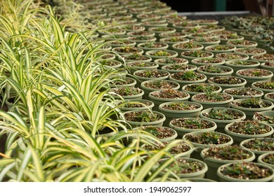 Plants in a Greenhouse at a Nursery