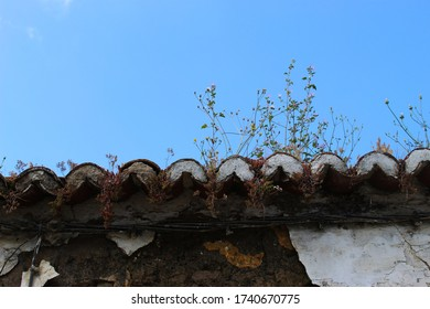 The plants grow on an abandoned old roof. Beja, Portugal.