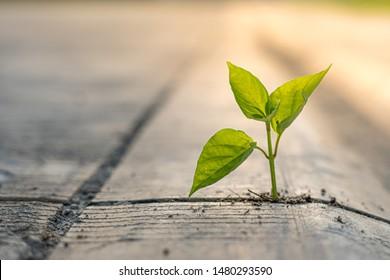 Die Pflanzen wachsen mit Geduld auf dem Zementboden.