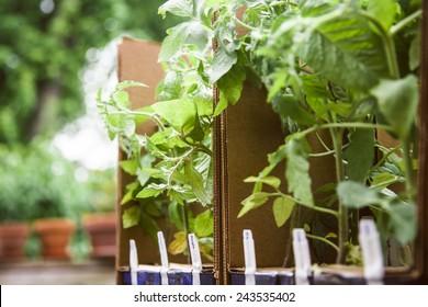 Plants growing in cardboard boxes