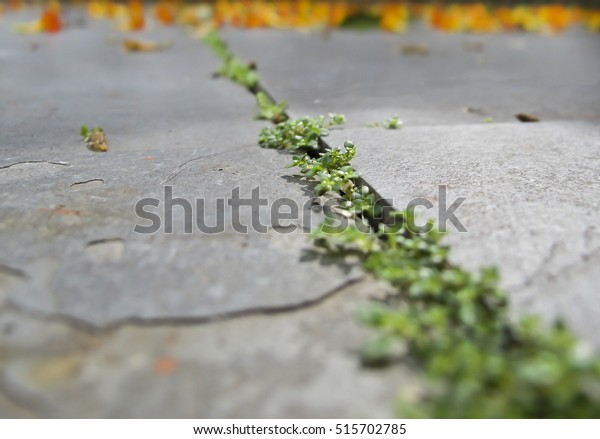 Plants Growing Crack Stone Selective Focus Stock Photo (Edit