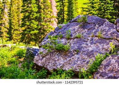 Plants growing from crevices in a boulder