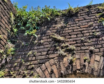 Plants Growing in Crevices of an Old Brick Wall
