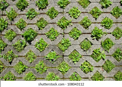 Plants growing in the holes of the pavement