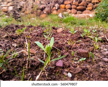 Plants Growing on Ground.