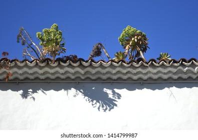 plants growing on roof. la laguna. tenerife