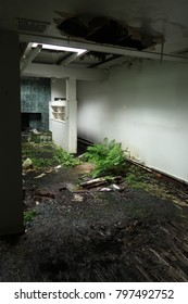 Plants growing out of the floor in an abandoned house. Natural light.