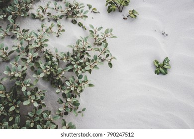 Plants growing in sand background