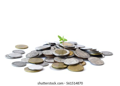 Plants  Growing In Savings Coins/ investment and retirement or education Concept