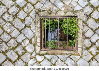 plants growing through a metal drain lattice