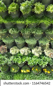 Plants growing vertically in pots outdoors to create a living wall.